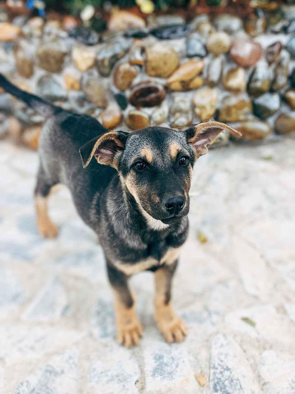 photo of black short coated dog